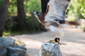 Epson Helps Preserve Rare Birds in Croatia